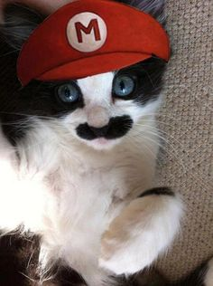 Super Mario Cat Creative and Funny Halloween Costumes For Pets Crazy Cat Lady, Crazy Cats, Super Mario Cat, Super Cat, I Love Cats, Cute Cats, Funny Kitties, Funny Animals, Cute Animals