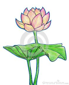 45 beautiful flower drawings and realistic color pencil drawings how to draw paint lotus flowers google search mightylinksfo