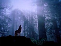 foggy forest   Tumblr
