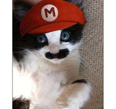 Mario Cat!