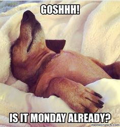Is it Monday already? #monday #morning
