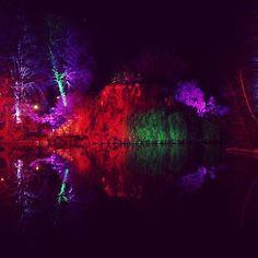 #winterlichter #Teich #spiegelung #palmengarten #palmengartenfrankfurt #frankfurt #frankfurtammain #trees