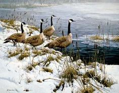 """Among the Cattails - Canada Geese"" by John Seerey-Lester"