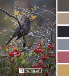 Canon, Bird, Animals, Landscape Photos, Cordoba, Argentina, Animales, Cannon, Animaux