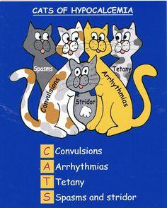 Hypocalcemia- Hypoparathyroidism, I couldn't not pin a cat/nursing school cartoon. Nursing Pneumonics, Med Surg Nursing, Medical Surgical Nursing, Nursing School Tips, Nursing Notes, Nursing Schools, Nursing Major, Nursing Profession, Nursing Diagnosis
