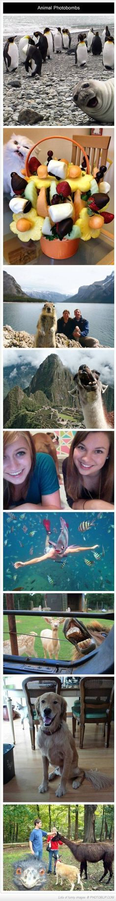 the best animal photo bombs ever
