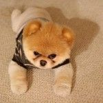 planets, outfits, galleries, puppies, cutest dogs, pet, bears, angri puppi, kisses