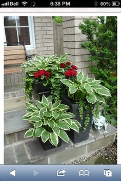 Like this idea of planting the hostas