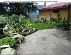 The driveway makes a sharp turn towords the east. There is a Vegie Celler under the lawn on the left plantings over the driveway, and chairs...