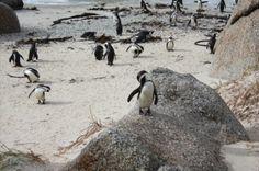Boulders Beach in Capetown.