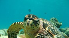 Image result for green sea turtle
