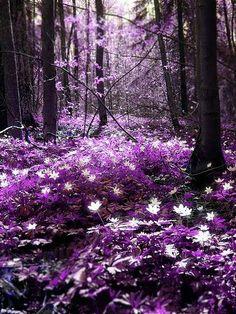 "Purple >>> Click the link to visit my friend's group board ""::: Purple Purple Purple! :::"": http://www.pinterest.com/koichirofujino/purple-purple-purple/"