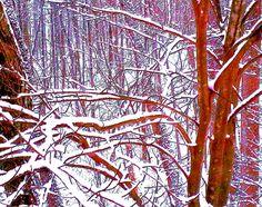 Gilmer County GA Snowy Woods (Jan 2016).