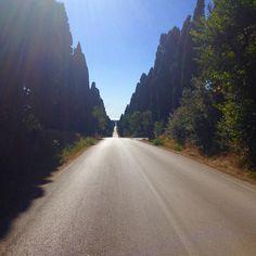 Weg nach Bolgheri