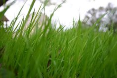 Great lawn tips for people with clay soil.