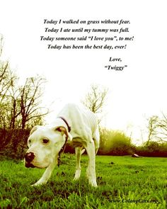 See Twiggy in my board (Pit Bull Love 4) when she was first rescued.