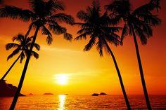 more a palmy - Hľadať Googlom
