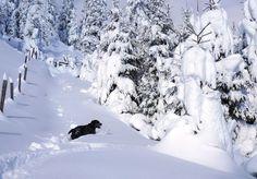 Jimbo the snowshoe d