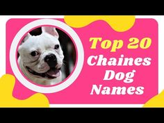Top 20 Best Chinese Names for Dogs Male and Female With Meaning 2021! Cute Chinese Dog Names - YouTube Cute Names For Dogs, Best Dog Names, Pet Names, Best Dogs, Cute Dogs, Chinese Dog, Chinese Name, Names With Meaning, French Bulldog