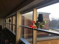 Hanging geraniums on the second floor of the SCSU Library