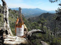 Le rosé Domaine Vico médaillé 2 fois Or en début 2016