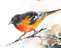 Baltimore Oriole Ave pintura ORIGINAL acuarela, amarillo pintura de aves, arte acuarela, pintura de aves