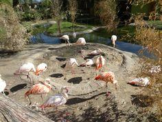 Zoo de Salzburgo, Áustria.