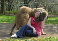 Image of Anatolian Shepherd Kara cuddling Welcome and come back again!