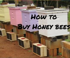 How to buy Honey Bees for your first hive. Getting started in bees the right way. Become a beekeeper this year. Buy Honey, Bee Farm, Bees Knees, Queen Bees, Bee Keeping, Honey Bees, Organic Gardening, Backyard, Stuff To Buy