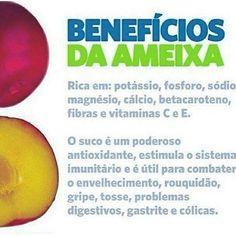Dicas de saúde Low Carb Diet, Ayurveda, Healthy Tips, Mango, Avocado, Food, Plum Fruit Benefits, Fruit Benefits, Nutrition Tips