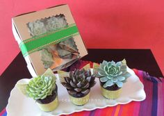 Succulent Gift Box with succulents in terracotta pots. on Etsy, $25.00