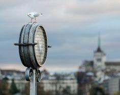 Bird O'Clock by Aleš Hrabě