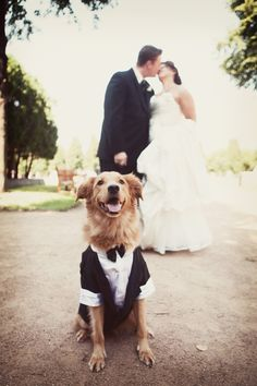 Getting down to your dog's level will give your photographer a different perspective of your wedding.