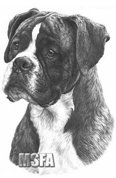 Artist M. Sibley | Boxer' print from graphite pencil drawing by Mike Sibley.