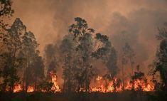 With the devastating fires occurring in Australia, we do urge everyone to donate. Below is a full list of organisations fighting the bush fires shared via the ABC. Every little bit helps. Australia Funny, Australia Travel, Australia Pictures, Vent Fort, Pink Lake, Australian Bush, Asia News, Thinking Day, Natural Disasters