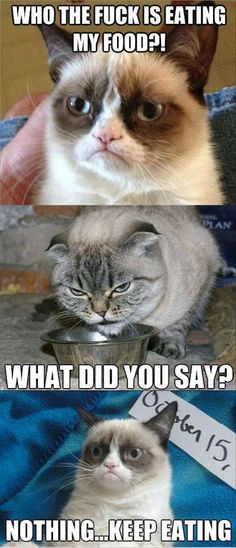 food?    AWW this reminds me of my cat momma Mrs. Mona! <3 miss her! :'(