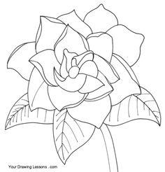 Gardenia flower drawing