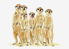 Meerkats, Original watercolor painting, 5x7, african animal painting, wild animals, exotic animals earthspalette