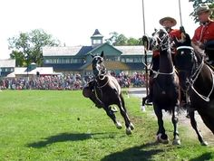 Unscheduled moment in RCMP musical ride in PEI: Hope rider okay Prince Edward, Musicals, Horses, In This Moment, Board, Animals, Animales, Animaux, Horse