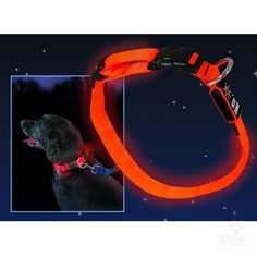 Nite Ize Nite Dawg LED Collar Your Dog, Led, Stuff To Buy, Products, Gadget