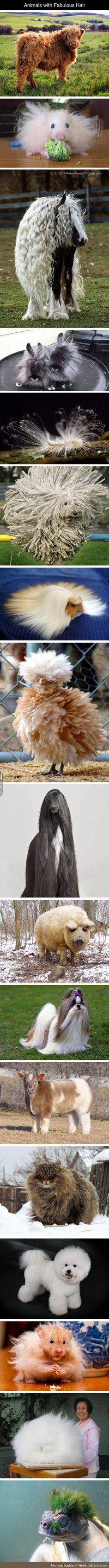 Fabulous hair