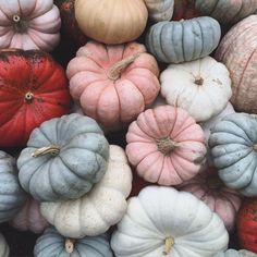 A pumpkin palette. Seasonal Decor, Fall Decor, Thanksgiving Wallpaper, Autumn Aesthetic, Autumn Cozy, Happy Fall Y'all, Fall Pictures, A Pumpkin, Fall Pumpkins