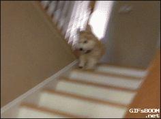 31 gifs para provar que cães são as melhores criaturas do mundo