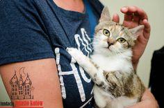 Lara is looking for a home ... #cute #cutecats #cats #caturday #kot #koty #neko #gato #katz #katzen #kittens #chat