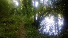 The Glades walk along the #boyneriver in #slane. #Ireland #Meath #visitslane #sunny #boynevalley