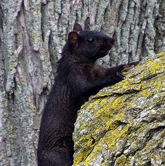Joy's Jots, Shots & Whatnots: Sun Best ~ Black Squirrels of Niagara Falls