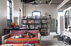 Cute Dogs in Offices - K9-5 New York Dogs At Work   Architectural Digest