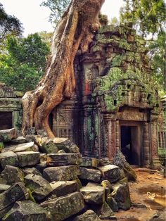 Travel through Cambodia and visit the Ta Prohm Temple in Angkor. Places Around The World, The Places Youll Go, Places To See, Around The Worlds, Ta Prohm, Laos, Les Continents, Exotic Places, Phnom Penh