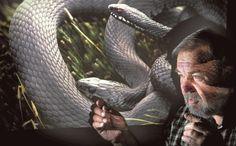 Kotkalainen käärmeasiantuntija Urpo Koponen , 64, kuvasi vuosikymmeniä käärmeitä väärin. Hän hiipi kyykäärmeiden lähelle ja räpsi kuvia. Käärmeet luikahtivat piilon pesäkoloihin, jolloin Koponen pakkasi tavaransa ja lähti pois. Eräänä päivänä hän huomasi, että kuvaustilanne ei olekaan ohi, kun kyyt luikertelevat piiloon.
