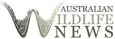 Australia WildLife News http://www.batsrule.org.au/wildliferules/2014/4/28/australia-wildlife-news #bats #wildlife #flyingfox #megabat #fruitbat